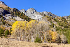 Naturalna rezerwa Queyras, France Zdjęcia Stock