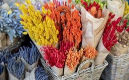 Naturalna ro?lina susz?cy kwiat dekoracji kwiatu wiecznie bukiety kwiecistej trawy stubarwni klejnoty do domu, lawenda fotografia royalty free