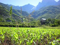 Naturalna roślinność w Albańskich średniogórzach, Theth, Albania obrazy royalty free