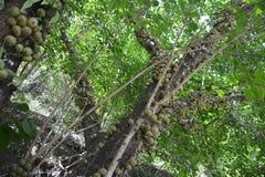 Naturalna roślina Fotografia Stock