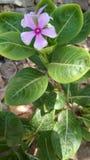 Naturalna roślina samotnie zdjęcie royalty free