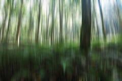 naturalna t?o ilustracja Rozmyty wizerunek drzewa i światła w zieleni, czarny i biały ruch barwi Pionowo linii widok fotografia royalty free
