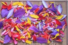 Naturalna tekstura stubarwni kwiatów płatki Zdjęcie Royalty Free