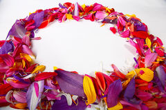 Naturalna tekstura stubarwni kwiatów płatki, kolorowa Fotografia Stock