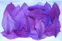 Naturalna tekstura stubarwni kwiatów płatki, kolorowa Zdjęcia Stock