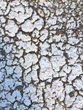 Naturalna tekstura whith biali ścienni punkty wilgotność fotografia royalty free