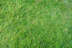 naturalna trawy zieleń Zdjęcie Royalty Free