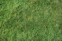 naturalna trawy zieleń Obraz Stock