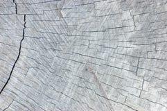 Naturalna Wietrzejąca Popielata Drzewnego fiszorka Rżnięta tekstura, ampuła Wyszczególniająca Textured Horyzontalnego Deseniowego Zdjęcia Stock