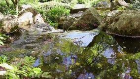 Naturalna woda rzeczna zbiory wideo