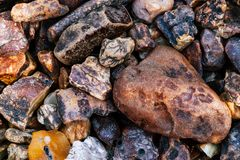 Naturalna złocista tekstura Stubarwny tło dla reklamować i sztandarów Rocznik fossilized żywica jako tło czerwone zdjęcie stock
