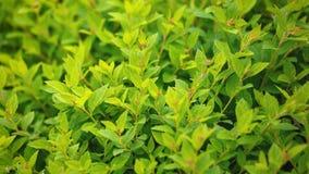 Naturalna zielona liść tekstura Zdjęcia Stock