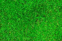 Naturalna zielona trawa w odgórnym widoku obrazy royalty free
