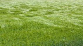 Naturalna zielona trawa z fala wiatr tło szczegółów tekstury okno stary drewniane bell świątecznej element projektu Fala wiatrowy Obraz Stock
