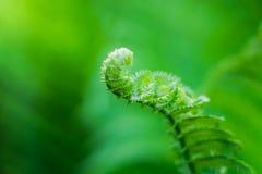 Naturalna zielonej rośliny fotografia zdjęcia stock