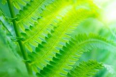 Naturalna zielonej ro?liny fotografia zdjęcie stock