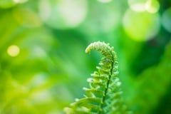 Naturalna zielonej ro?liny fotografia zdjęcia stock