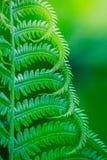 Naturalna zielonej ro?liny fotografia fotografia stock