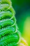 Naturalna zielonej ro?liny fotografia zdjęcia royalty free