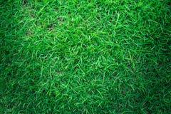 Naturalna zielonej trawy tekstura lub zielonej trawy tło dla projekta Obraz Stock