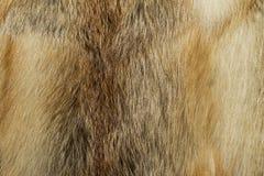Naturalna zwierzęca futerkowa tło tekstura żółta lis wełna w górę zdjęcie stock