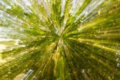 naturalne abstrakcyjne tło Plama i światło obraz z koroną Fotografia Stock
