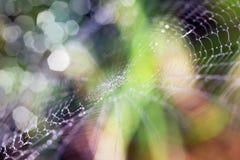 naturalne abstrakcyjne tło Fotografia Royalty Free