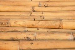 Naturalne brown bambus sterty Obraz Stock