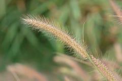 Naturalne brown bambus sterty Zdjęcia Stock