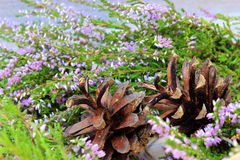 Naturalne drewniane rośliny Obrazy Stock