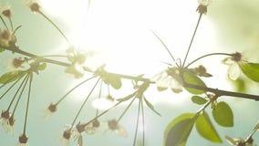 Naturalne gałąź z kwiatu tłem zbiory wideo