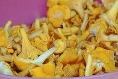 Naturalne kolor żółty pieczarki Zdjęcia Stock