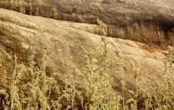 Naturalne krajobrazowe tropikalne lasowe trawy i wzgórza skały Obraz Stock