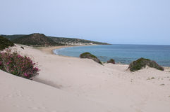 naturalne na plaży Zdjęcie Royalty Free