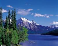 naturalne otoczenie zdjęcie royalty free