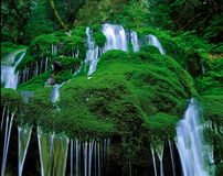 naturalne otoczenie Fotografia Royalty Free