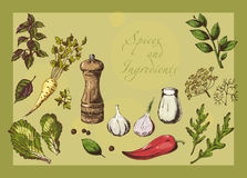 Naturalne pikantność i składniki Fotografia Stock