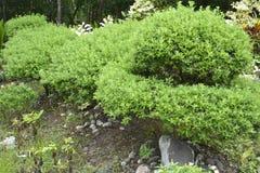 Naturalne rośliny przy Matanao, Davao Del Sura, Filipiny zdjęcia stock