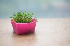 Naturalne rośliny w małej różowej filiżance obrazy royalty free