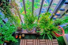 Naturalne rośliny w wiszących garnkach przy balkonem uprawiają ogródek Zdjęcie Stock