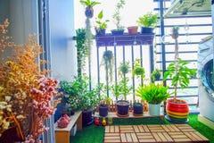 Naturalne rośliny w wiszących garnkach przy balkonem uprawiają ogródek Fotografia Royalty Free