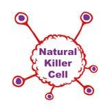Naturalne zabójca komórki royalty ilustracja
