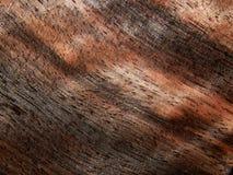 Naturalnego drewno forniru drewniany heban Eben Makassar zdjęcie royalty free