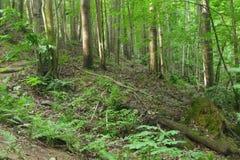 Naturalnego lasu krajobrazu drzew światła słonecznego pokojowy zielony pustkowie obrazy royalty free