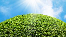 Naturalnego lata świeży jaskrawy tło Bujny zielony ulistnienie przeciw niebieskiemu niebu z chmurami i słońce promieniami Uwalnia obraz stock