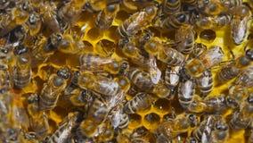 Naturalnego miodu, pszczoły produkt spożywczy wosk, i tworzy miód zdjęcie wideo