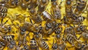 Naturalnego miodu, pszczoły produkt spożywczy wosk, i tworzy miód zbiory