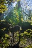 Naturalnego parka goldau obraz stock