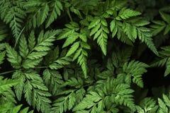 Naturalnego tła Kupyr horyzontalni deseniowi lasowi marchwiani pierwszy plany Obraz Royalty Free