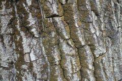Naturalnego tła sucha drzewna barkentyna z mech Zdjęcia Royalty Free